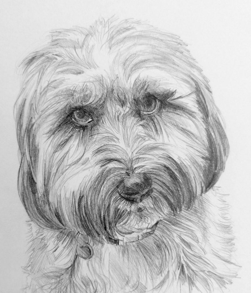 disegno a matita cane