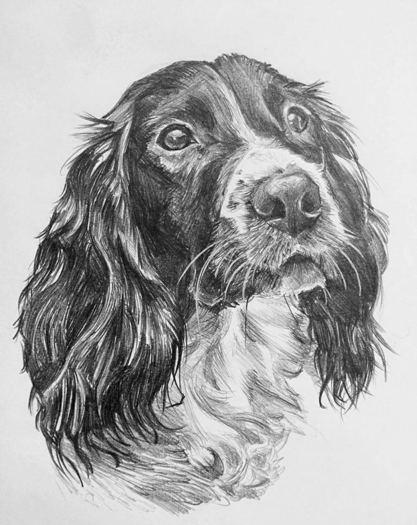 ritratti a matita cani
