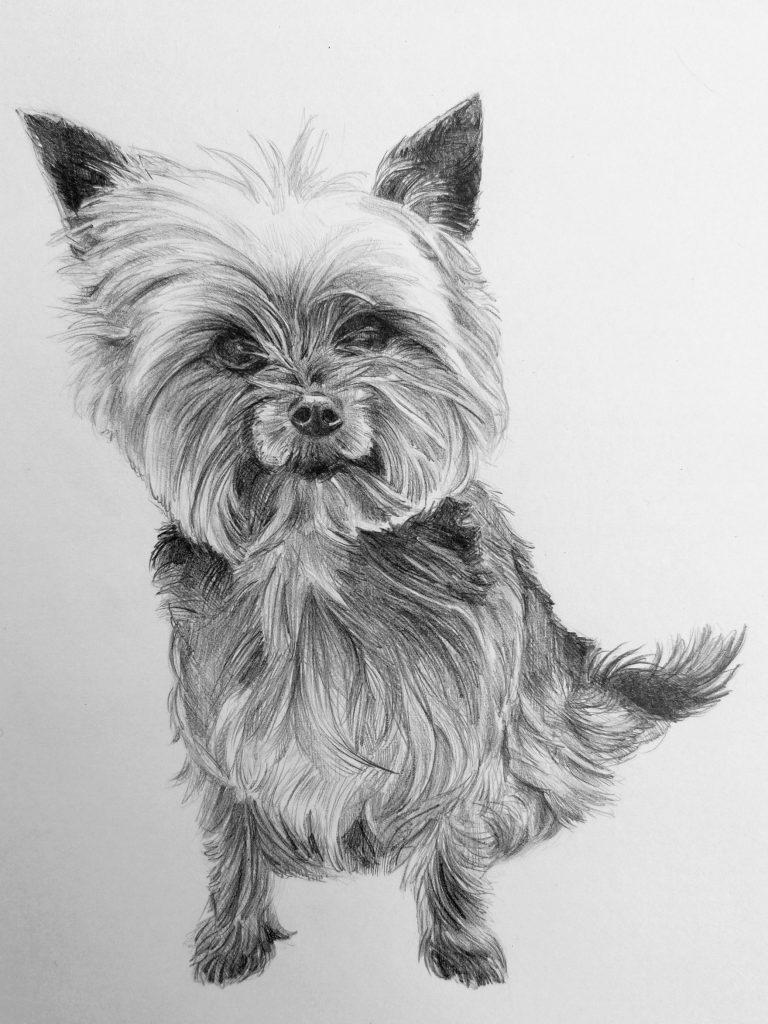 ritratti a matita di cani