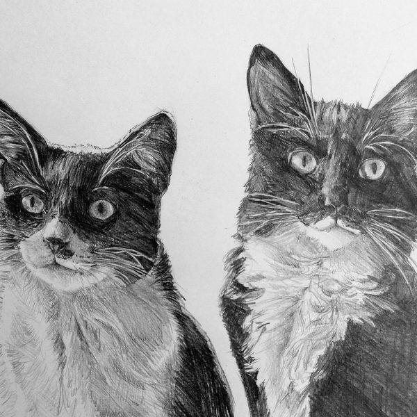 ritratti a matita gatti