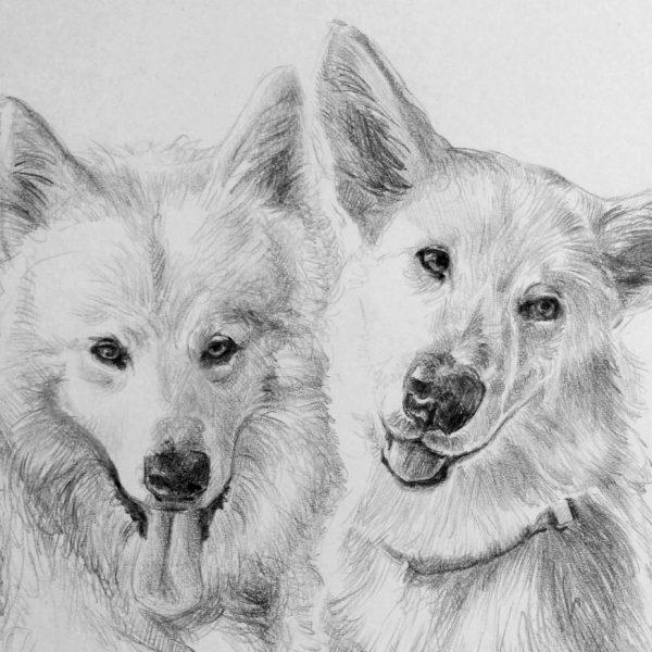 ritratto a matita coppia di cani
